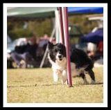 dogs11.jpg