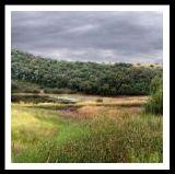 landscape28.jpg