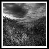 landscape08.jpg